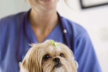 Veterinarian assistants help ensure smooth operations at animal clinics.
