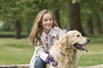 Brush your dog regularly to minimize mats.