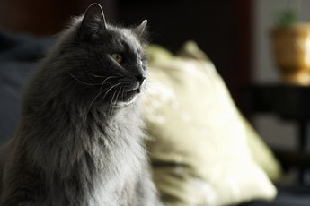 Common Old-Age Cat Diseases