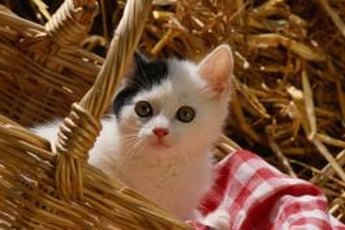 It's important to vaccinate kittens to prevent distemper and herpes.