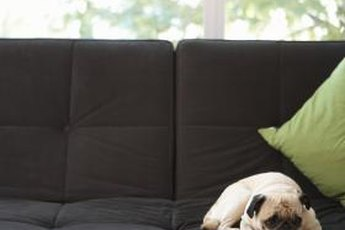 Correcting your pup's behavior can stop him from taking over your furniture.