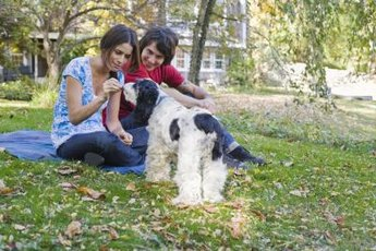 Reward your cocker spaniel poodle mix with a treat each time he relieves himself outside.