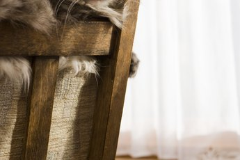 Are Cats Affected by Dust in the Home?
