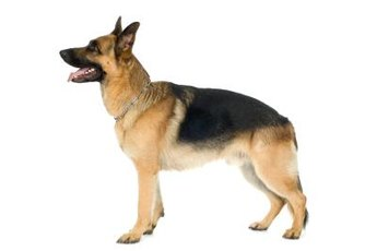 The DNA mutation causing degenerative myelopathy is now known.