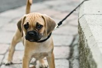 Keep the walk fun for your puppy.