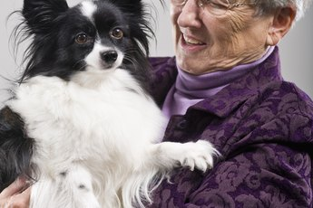 Fixing Barking & Whining From Anxiety in a Papillon