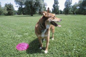 How to Teach Dogs Yard Boundaries