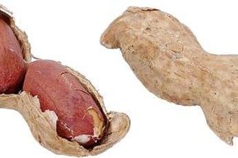 Cut calories by choosing boiled peanuts over dry-roasted varieties.