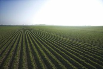Agriculture offers a variety of opportunities for retail investors.