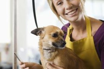 A nervous dog may need a muzzle until she learns grooming doesn't hurt.