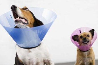 Uncomfortable as they may be, E-collars can protect your pup's wounds.
