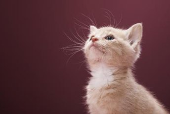 Kittens typically don't need much convincing to use the litter box.