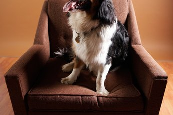 How to Keep Dogs From Using the Bathroom on the Furniture