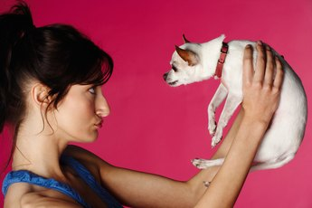 How to Retrain a Chihuahua to Use Puppy Pads at an Older Age