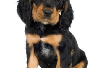 It is not a good idea to allow a Rottweiller to nip.