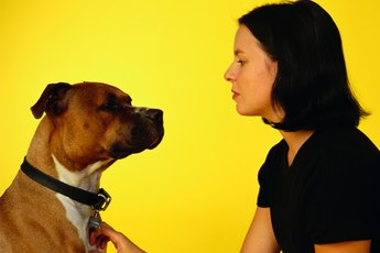 How to Teach a Pit Bull to Speak