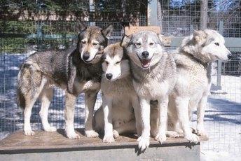 Dog Fence Kennel Ideas