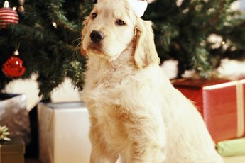 How to Make Homemade Pet Ornaments