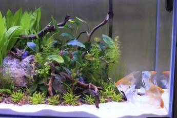 Set the aquarium up at least 24 hours before adding fish.