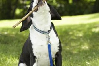 Sticks can be harmful to your pup.