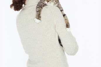 Homemade Diets for Cats With UTIs