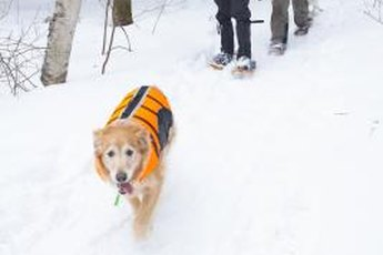 Cute, warm and fashionable, vests are among the accessories that can irritate your dog's pits.
