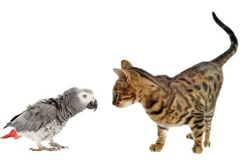 What Animals Get Along with Parrots?