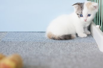 How to Clean Feline Fur Tear Stains