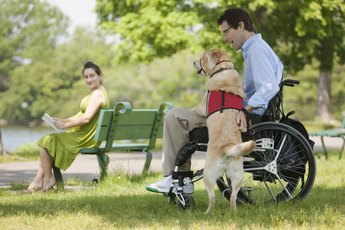 Are Service Dogs Covered by Insurance?