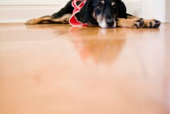 Ringworm may survive on wood floors for several weeks if floors aren't cleaned.