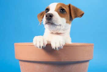 Transform old flower pots into a puppy dog sculpture.