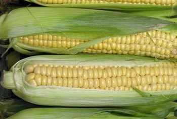 Most of the corn grown in the U.S. is genetically engineered.