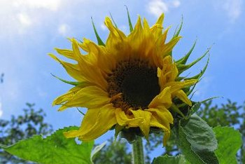 Sunflower seeds are generally rich in selenium.