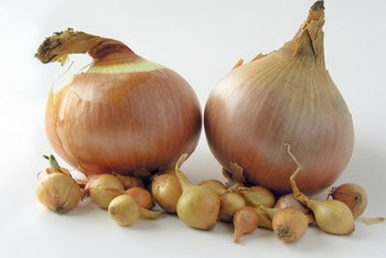 Onions provide a wealth of potential prebiotic benefits.