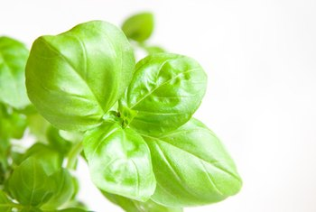 Holy basil may help reduce some of the effects of stress.