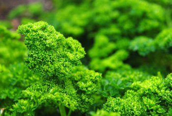 Parsley is a nutrient-rich food rich in vitamin A.