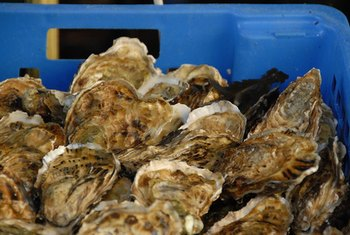 Raw and canned oysters bring nutritional benefits to the table.