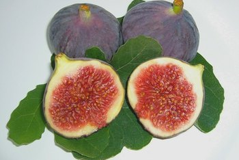Figs are a nutritious fruit.