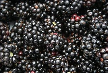 Blackberries are particularly fiber-rich.