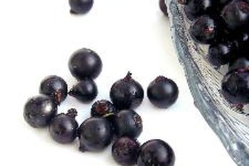 A cup of dried black currants contains more potassium than a similar serving of fresh black currants.