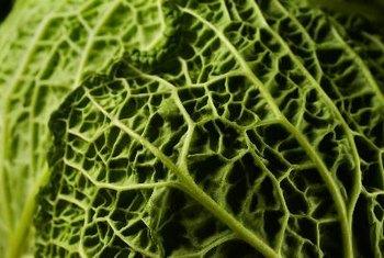 Les régimes végétaliens peuvent obtenir tous les nutriments essentiels en mangeant des aliments à base de plantes.