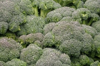 Broccoli is full of vitamins and available year-round.