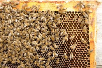 Vegans believe that gathering honey can harm bees.