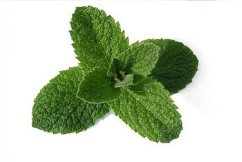 Stevia products come from an herb called Stevia rebaudiana.