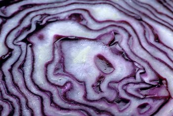 Purple cabbage has a light, refreshing taste.