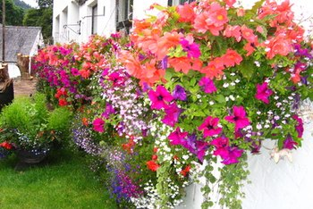Don't forget the landscaping when you are planning home improvements.
