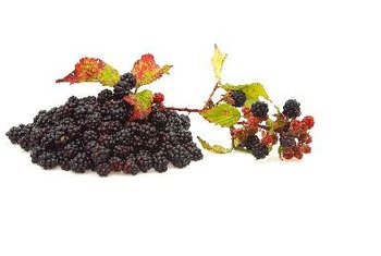 Blackberries contain compounds that may help protect you from heart, brain and cell damage.