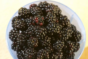 Blackberries complement just about any meal.