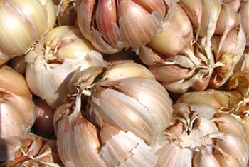 Eat garlic as a source of vitamins B-6, C and B-1.