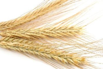 Wheat germ is rich in vitamins, minerals, protein and fiber.